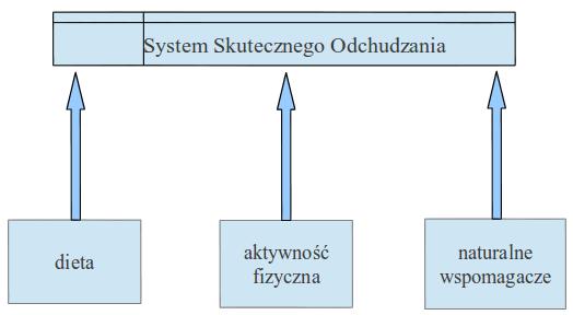 system odchudzania wykres